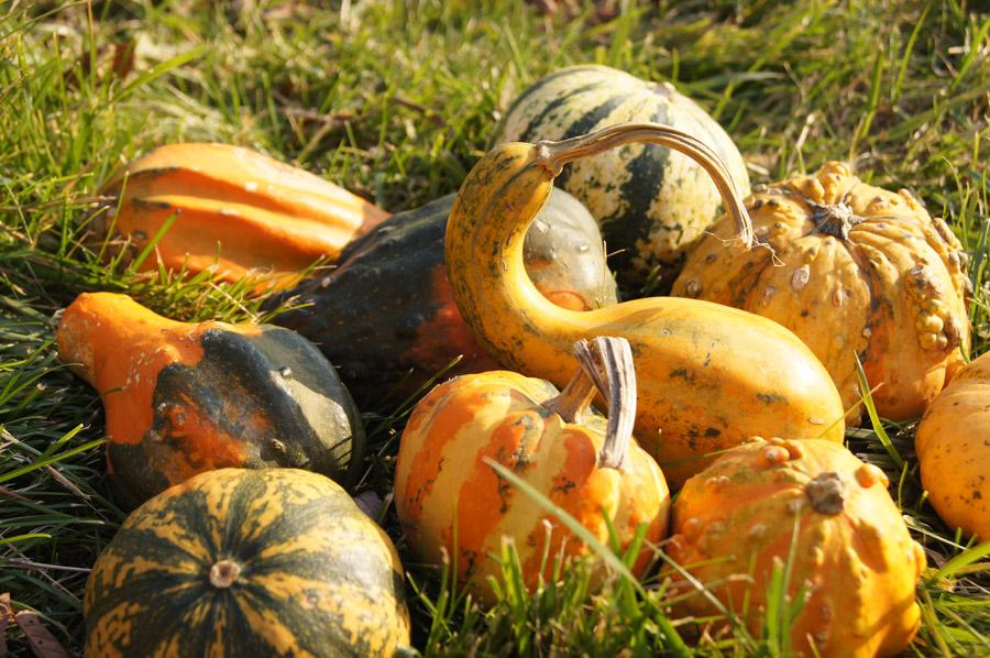 gourds final