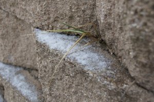 Ice coated this little bit of grass growing in a wall