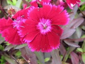 flowers IMG_2221