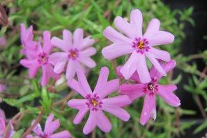 flowers IMG_2227