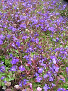 flowers IMG_2231