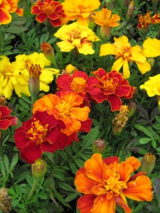 flowers IMG_2239