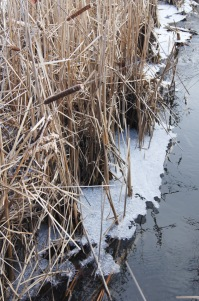 Check out the ice crystals near the bottom - cool!