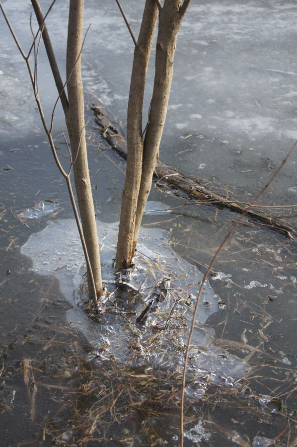 Ice made interesting patterns around flooded items
