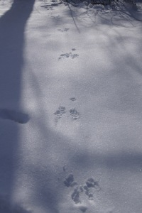 Squirrel prints!
