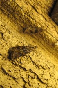 bugs IMG_1777