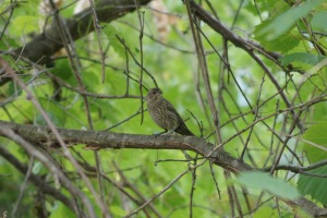 An LBB (little brown bird). Could be a sparrow? a finch? a hawk?