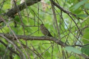 An LBB (little brown bird). Could be a sparrow? a finch? a hawk?