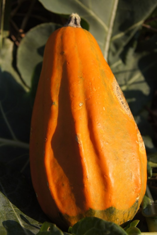 One of the gourds from a previous post