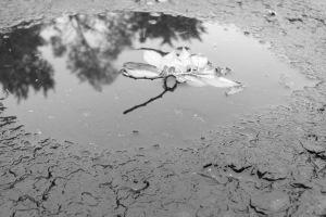 reflections IMG_3657