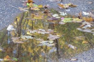 reflections IMG_7557