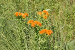 Don't know what these are called, but I love the bright orange!