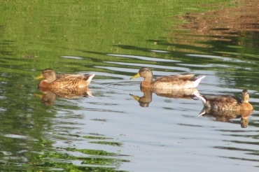 reflections 110820-IMG_6545