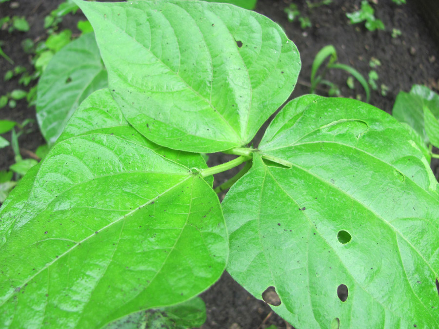 green 130626-IMG_4526