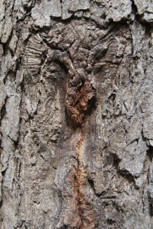 A scar on a tree trunk